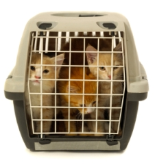 image of kittens in cat carrier