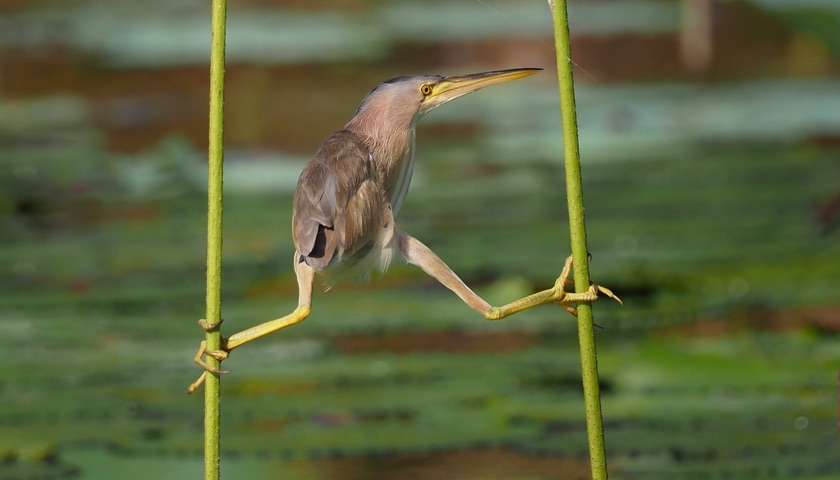 Image of a bird balancing on two stems