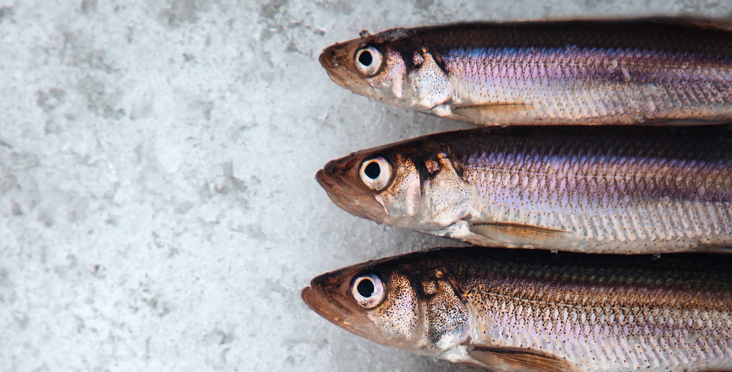 Image of mullet fish